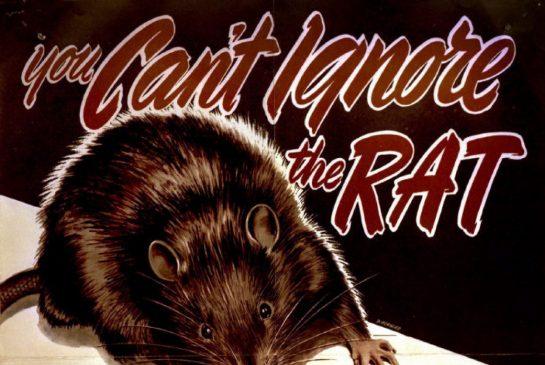 rat2.jpg.size.xxlarge.promo
