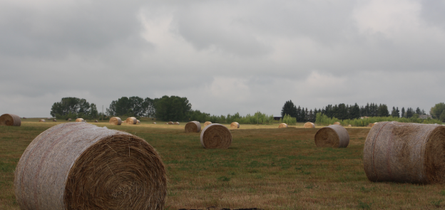 Rural Alberta Advantage